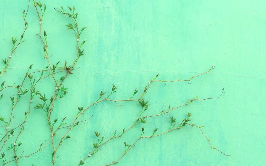 vine growing on wall